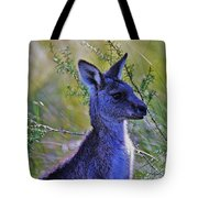 Eastern Grey Kangaroo Tote Bag
