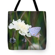 Eastern Tailed Blue Butterfly On Pincushion Flower Tote Bag