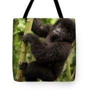Endangered Mountain Gorillas Habitate Tote Bag