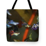 Fancy Guppys Tote Bag