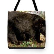 Florida Black Bear Tote Bag