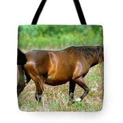 Florida Spanish Horse Tote Bag
