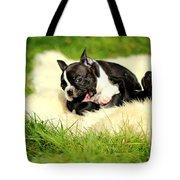 French Bulldoggs Tote Bag
