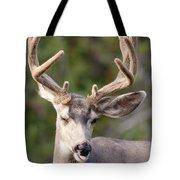 Funny Mule Deer Buck Portrait With Velvet Antler Tote Bag