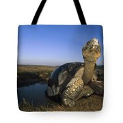 Galapagos Giant Tortoise Wallowing Tote Bag