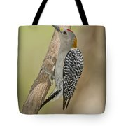 Golden-fronted Woodpecker Tote Bag