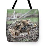 Golden Jackal Canis Aureus Tote Bag