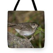 Gray-cheeked Thrush Tote Bag