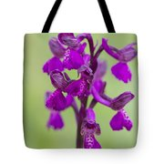 Green-winged Orchid Tote Bag