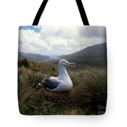 Grey-headed Albatross Tote Bag