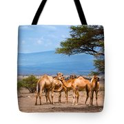 Group Of Camels In Africa Tote Bag