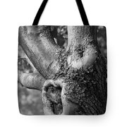 Growth On The Survivor Tree In Black And White Tote Bag