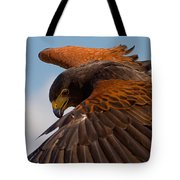 Harris Hawk Approach Tote Bag