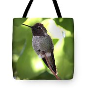 Hummingbird Hangout Tote Bag