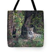 Jaguar Panthera Onca, Pantanal Tote Bag