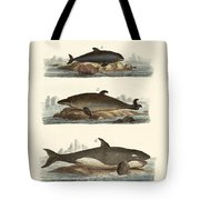Kinds Of Whales Tote Bag