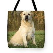 Labrador Retriever Dog Tote Bag
