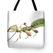 Leaf Insect Species Phyllium Bioculatum Male Tote Bag