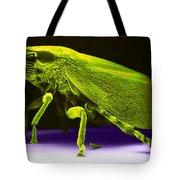 Leafhopper, Sem Tote Bag by David M. Phillips