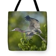 Little Blue Heron Tote Bag
