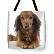 Long-haired Dachshund Tote Bag