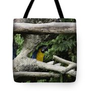 2 Macaws Framed By Tree Branches Inside The Jurong Bird Park Tote Bag