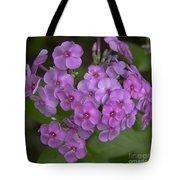 Magenta Phlox Tote Bag