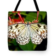 Malabar Tree Nymph Butterfly Tote Bag