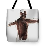Male Muscle Anatomy Of The Human Back Tote Bag