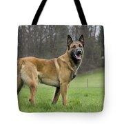 Malinois, Belgian Shepherd Dog Tote Bag