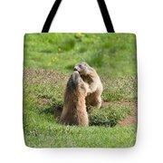 Marmots Tote Bag