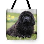 Newfoundland Dog Tote Bag