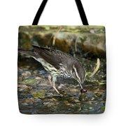 Northern Waterthrush Tote Bag