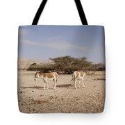 Onager Equus Hemionus Tote Bag