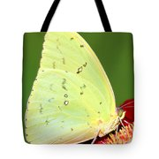 Orange Barred Sulfur Butterfly Tote Bag