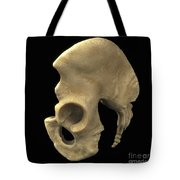 Pelvic Bones Male Tote Bag