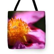 Pink Rockrose Tote Bag