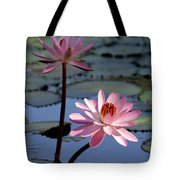 Pink Water Lily In The Spotlight Tote Bag