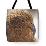 Portrait Of Nz Alpine Parrot Kea Nestor Notabilis Tote Bag