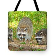 Raccoons Tote Bag