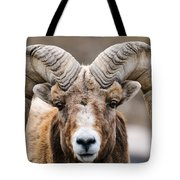 Rocky Mountain Big Horned Sheep Tote Bag