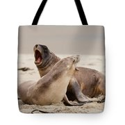 Rough Courtship Of Male And Female Hookers Sealions Tote Bag