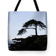 Silhouette Of Monterey Cypress Tree Tote Bag