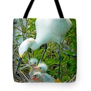 Snowy Egret Tending Young Tote Bag