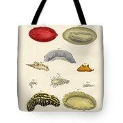 Strange Molluscs Tote Bag