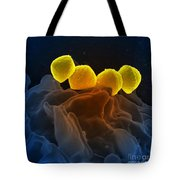 Streptococcus Pyogenes Bacteria Sem Tote Bag by Science Source