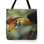 Sulawesi Red-knobbed Hornbill Male Tote Bag