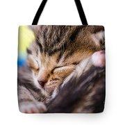 Sweet Small Kitten  Tote Bag