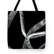 Tapeworm Cestoda Tote Bag