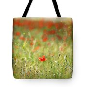 The First Poppy Of The Field Tote Bag